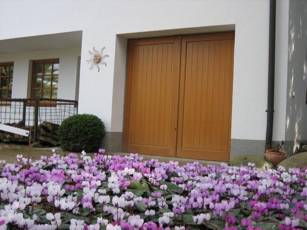 Cyclamen coum Mix im 6 er Pack (i.9cmT.) Frühlings Wildalpenveilchen im 6 Pack