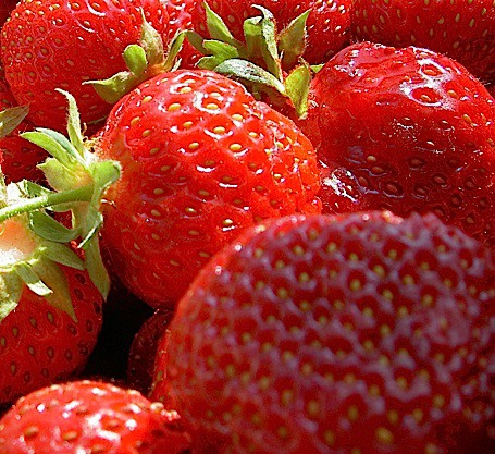 "Fragaria ""Korona"" (10 cmTopf) Erdbeere, mittelfrüh"