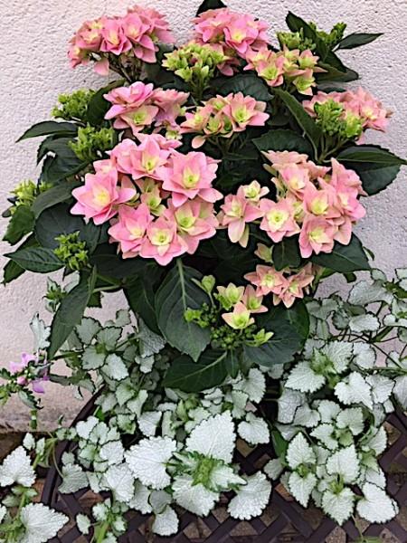 Blütenfreude bis Oktober mit...