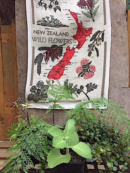 Neuseeland Paket