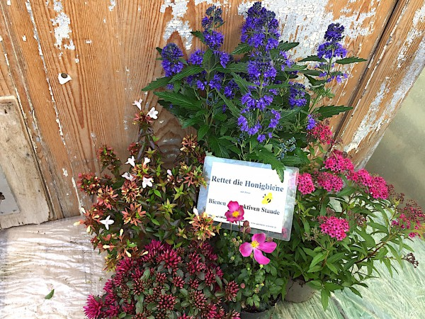 Herbst- Bienenfutter Paket -- Tisch nochmal richtig auf...