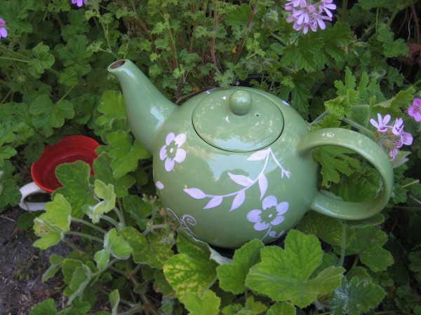 Duftblatt- Pelargonien 6 Pack Tee Pelargonien(11cmT.)